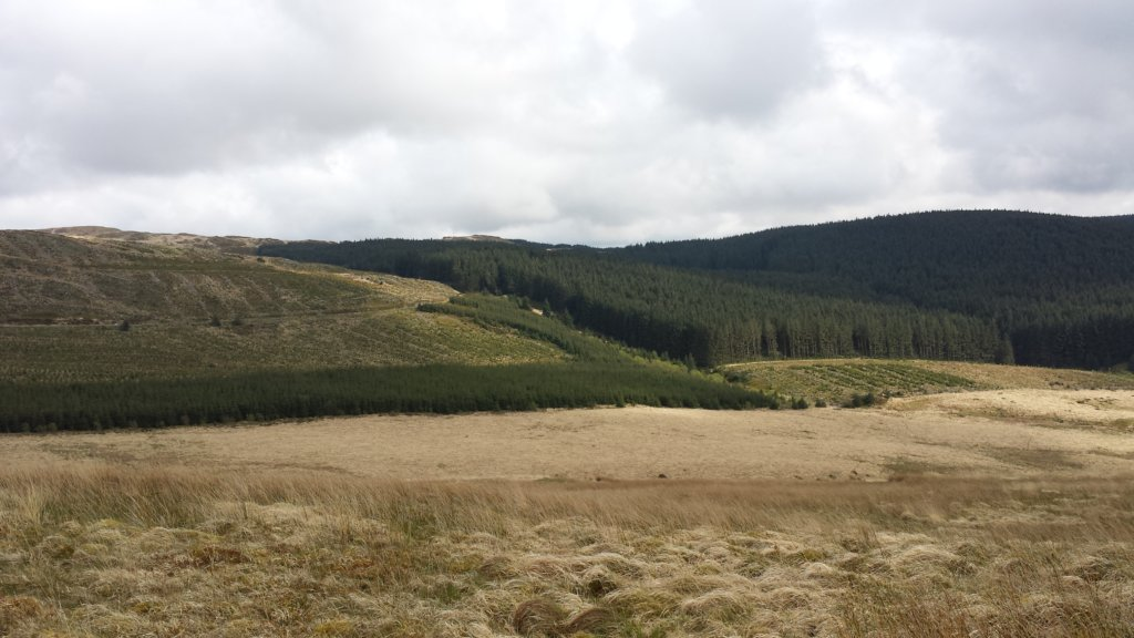 Cambrian Wildwood - Rewilding an area in Mid Wales