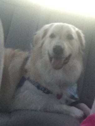 Aspen in the car right after her test!  SMILE!