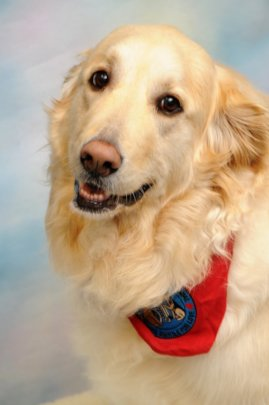 Meet Aspen!  Certified Therapy Dog.