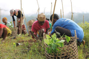 Teaching planting techniques to communities