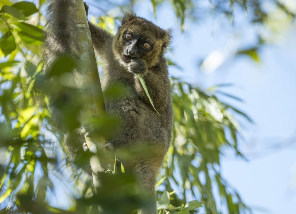 Reports on Help SOS save Madagascar'