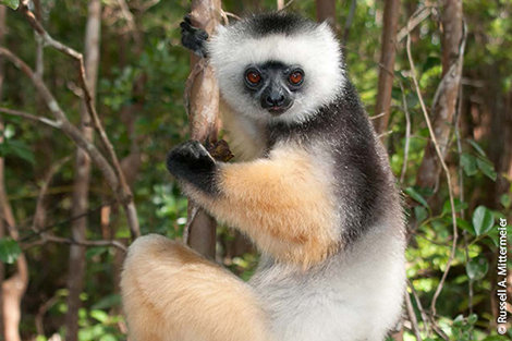 Help SOS save Madagascar's Lemurs and Communities