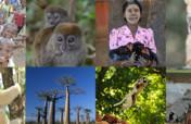 Help SOS save Madagascar's Lemurs and Communities
