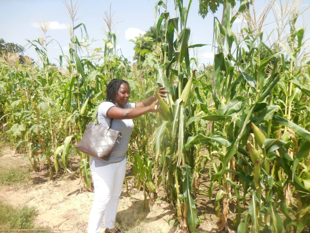 CBG-WA team member in a corn field