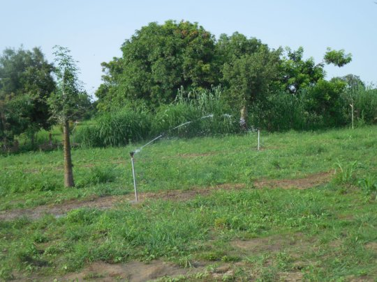 Solar Sprinkler System Installed by CBG