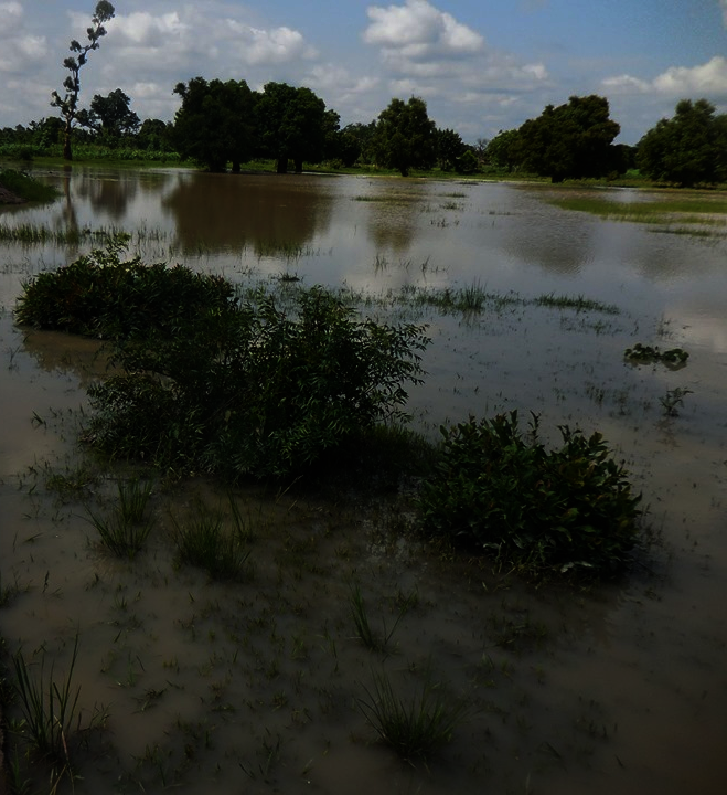 View of the rainwater catchment basin, July 2019