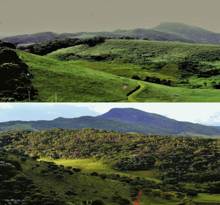 20 years of reforestation