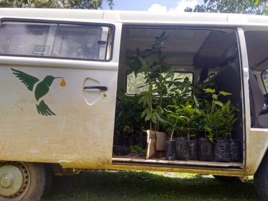 IraKombi full of seedlings