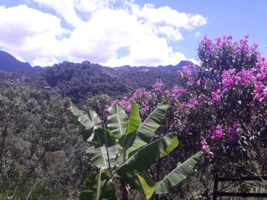 Forest in flower - a sight for sore eyes