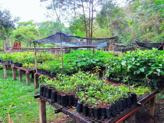 Our nursery full of seedlings prior to the deliver