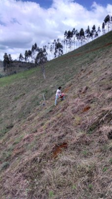 Gui preparing the reforestation plots