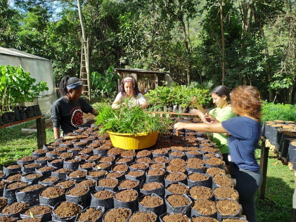 Volunteers planting Palmito Jussara!