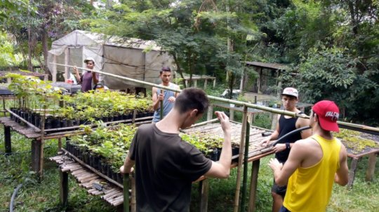 Irrigation process with the help of volunteers