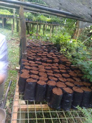 Getting ready for planting