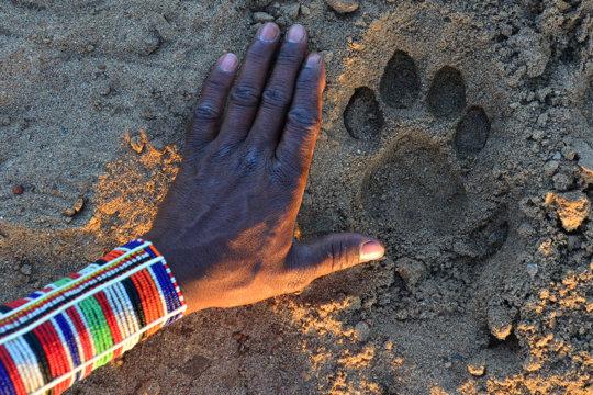 Maasai Olympics - Protecting Lions