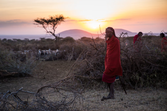Herders protect their livestock at night