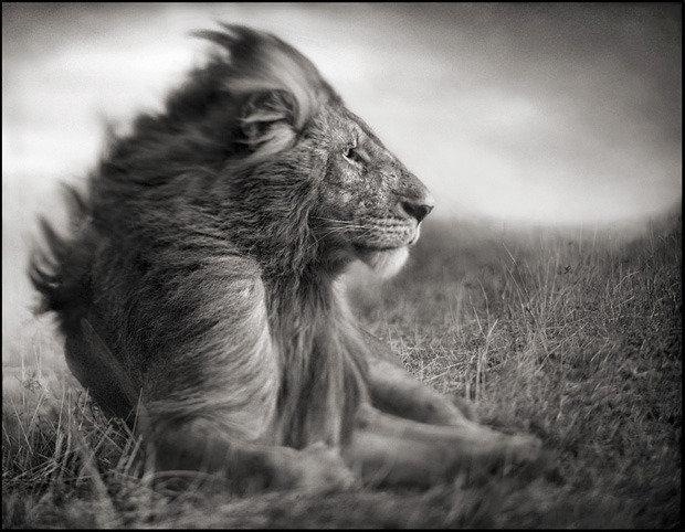 Maasai Olympics: Ending Lion Killings In Kenya