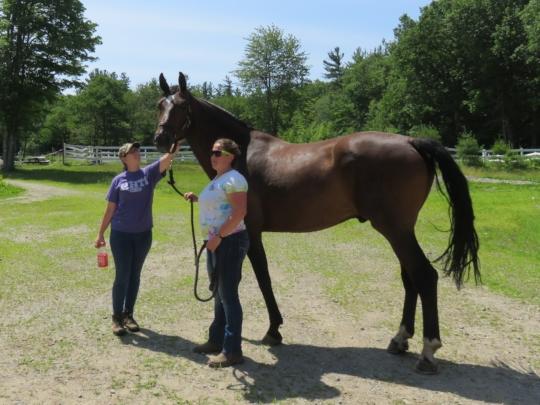 Veteran's Program Horse: Benevolence