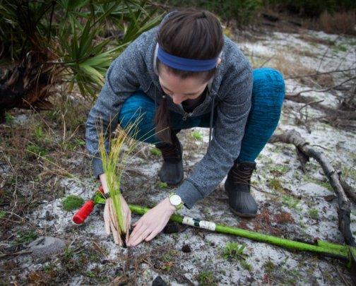 Tree Planting Volunteer