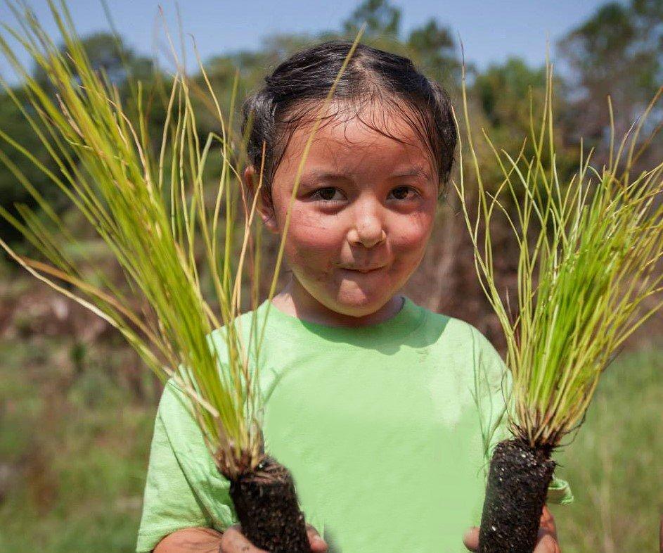 Help Us Plant 10,000 Longleaf Pine Trees in 2017