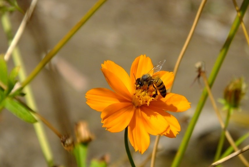Bees for pollination to improve lives in Ghana