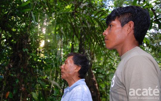 Sustaining Matses Indigenous Medicine - Phase II