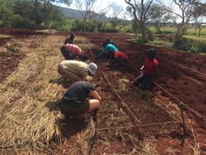 Students at work on Organic Onion Farm