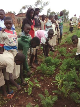 Youth planting seedlings in the garden