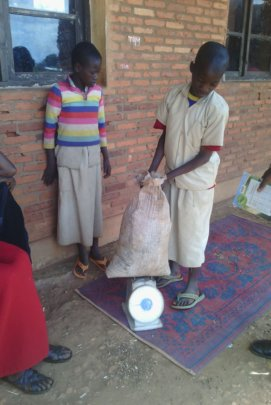 Learning math skills: Weighing beans from garden
