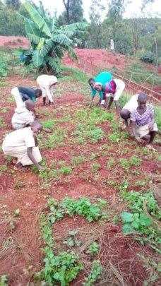 Students in their garden