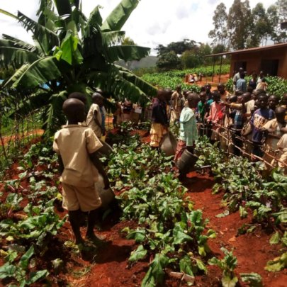 Students preparing to harvest their garden