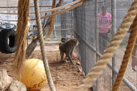 Billy release into enclosure