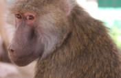 Help Rescued Monkeys in Arizona