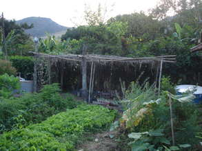 Antonio's greenhouse