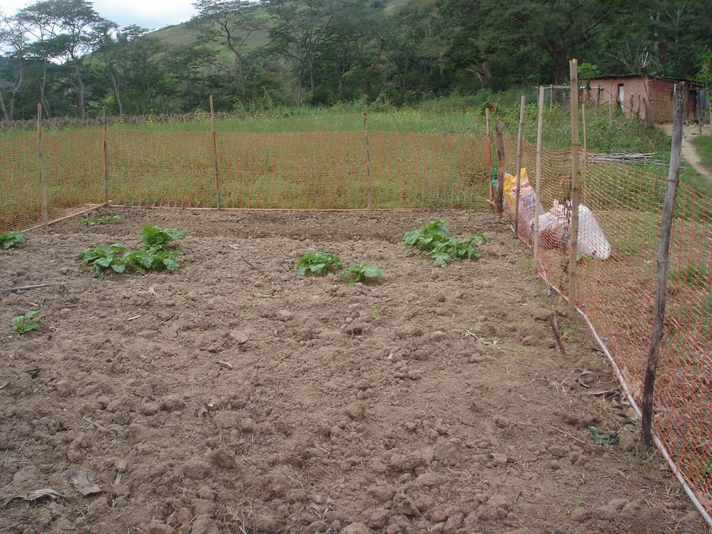 The first vegetable garden will be here.