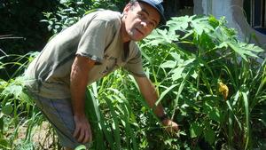 Proud of his saplings.