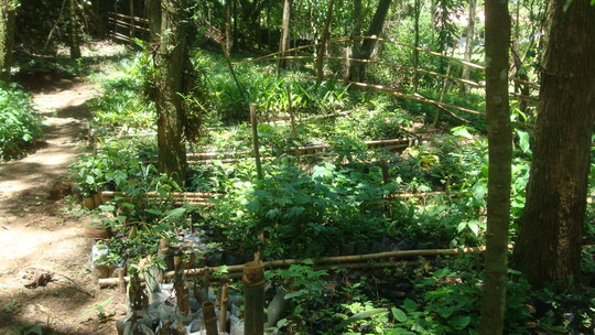 Wildlife Sanctuary tree nursery.