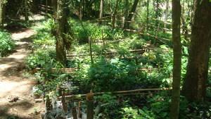 Wildlife Sanctuary tree nursery.