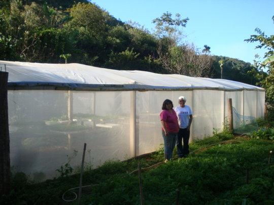 New greenhouse 2