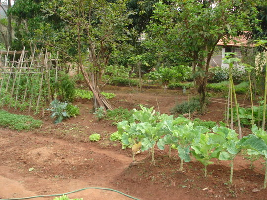 A view of the vegetable garden.