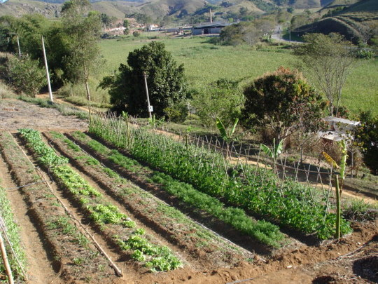 Organic Vegetable Garden in production.