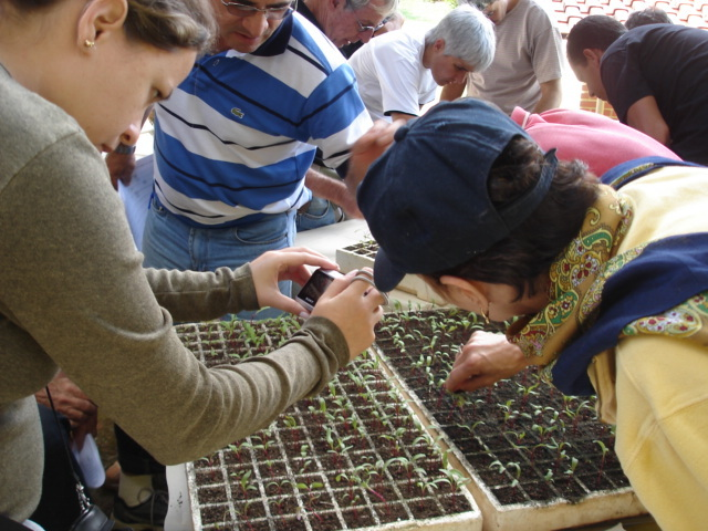Students and the planting trays