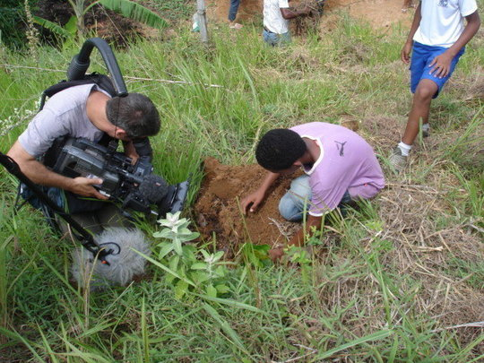 Planting a  tree sampling.