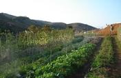 Provide Vegetable Gardens for Families in Brazil