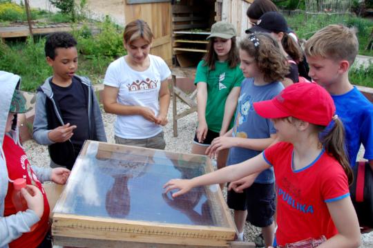 Students discover DIY solar dehydrators