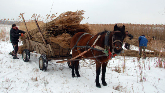 Eco-friendly transportation