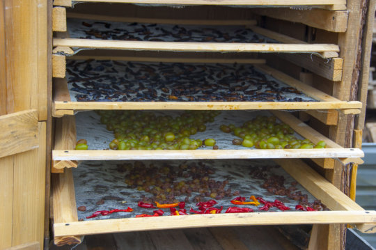 Drying fruits and vegetables using solar energy