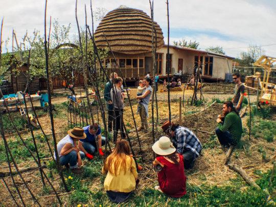 Organic gardening practical workshop