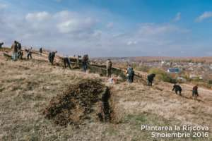 Planting trees to prevent soil erosion