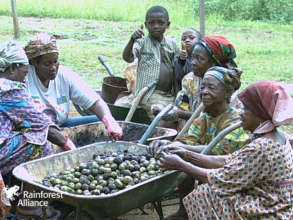 Women processing Njansan nuts